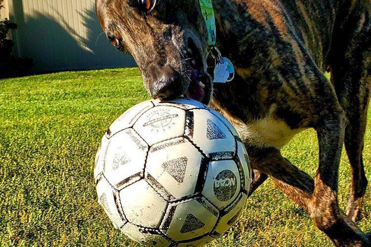 ball with greyhound